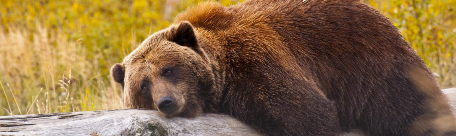 On Bears, Loans and Employment